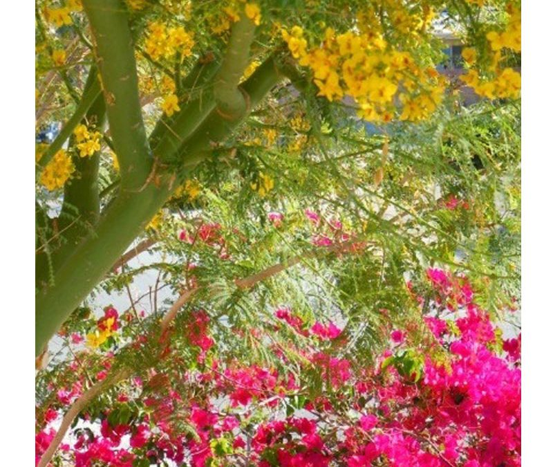 Spice up your Landscape with these Colorful Desert Plants