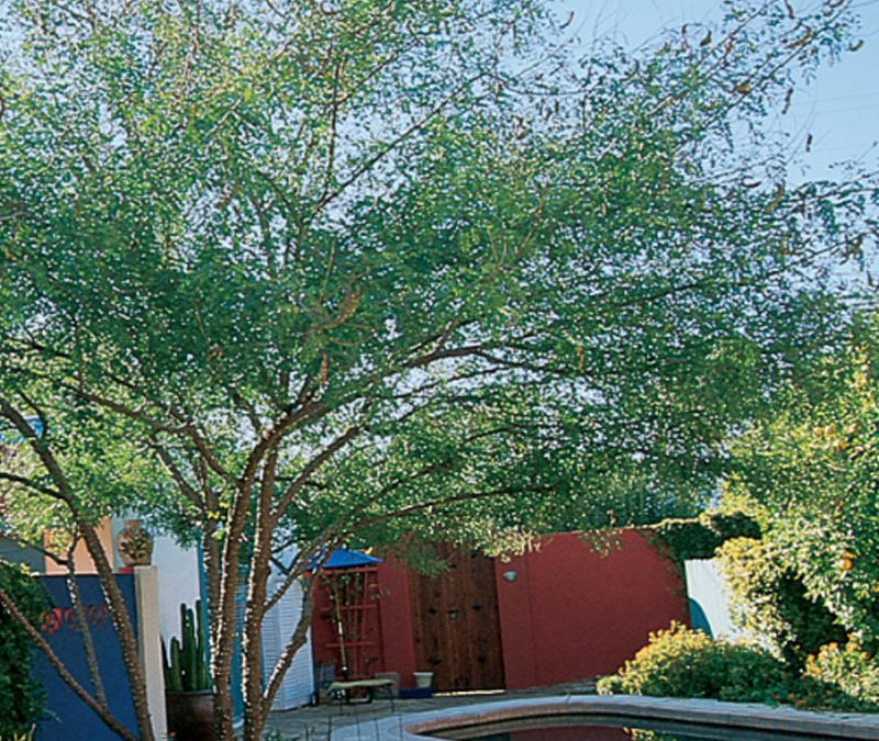 Sustainable Tree Pruning Practices
