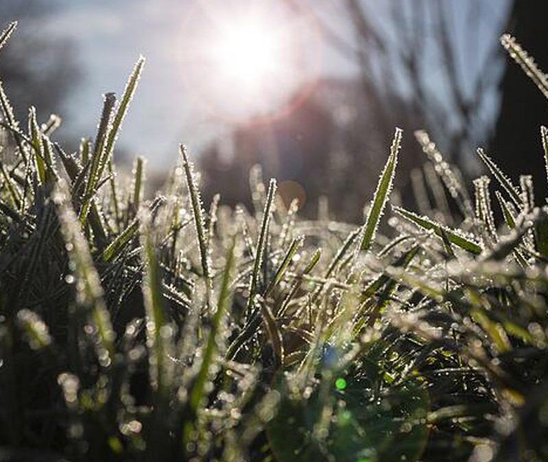 A Winter Guide to a Beautiful Lawn
